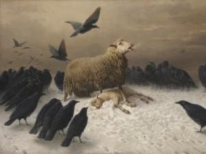 ewe-with-dead-lamb