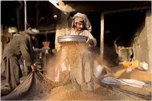 sifting-wheat
