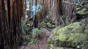 Mount-Oakleigh-bushwalk